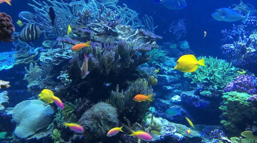 scuba diving at Corruption Rock, Andaman & Nicobar Islands
