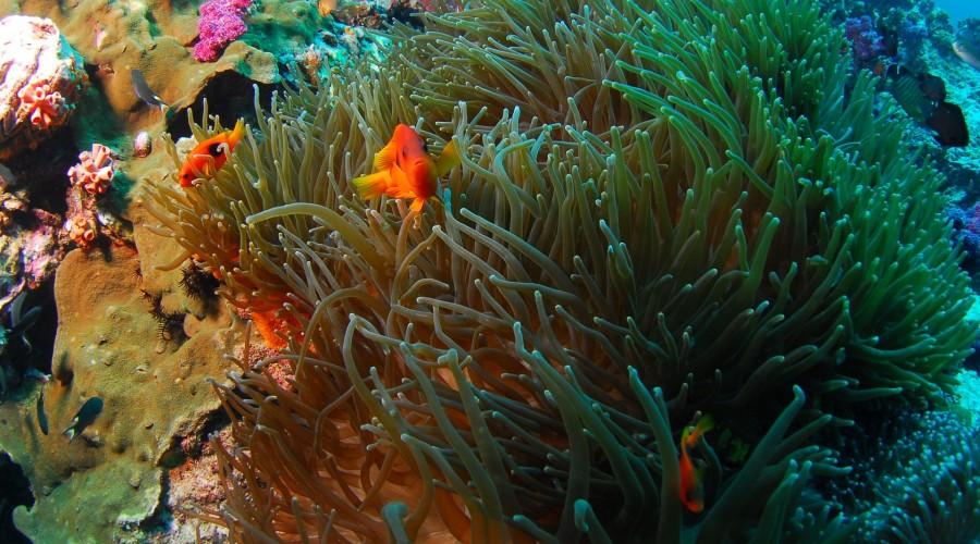 scuba diving at North Point, Cinque Island, Andaman & Nicobar Islands