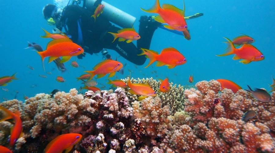 scuba diving at Havelock Islands, Andaman and Nicobar Islands