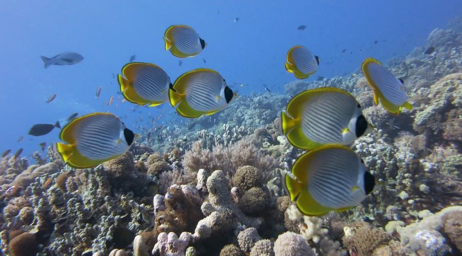 scuba diving at Port Blair, Andaman & Nicobar Islands
