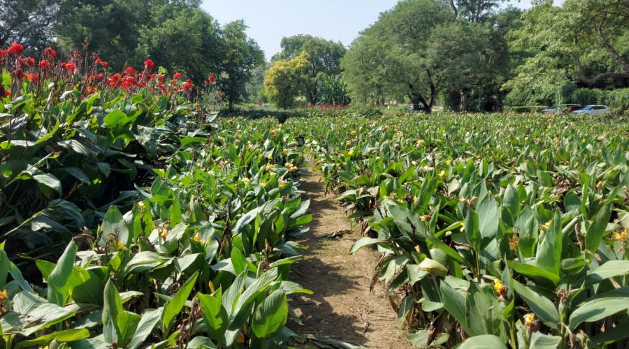 Sunder Nursery's Biodiversity Zone